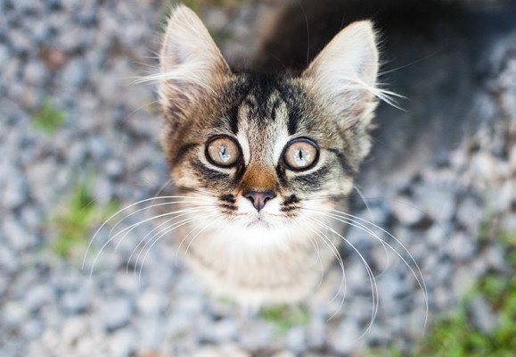 Wie organisiert man die Ankunft eines Kätzchen ?