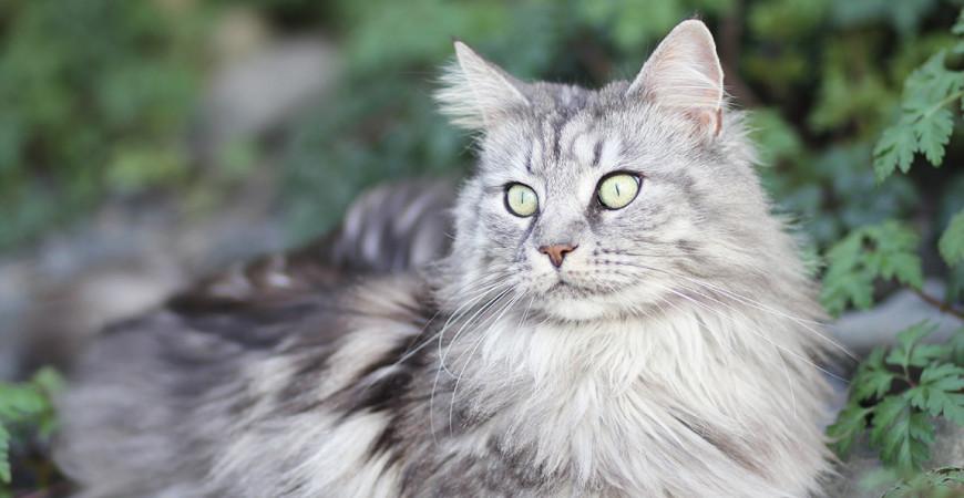 """Sagen Sie """"Miau"""" zur Schnurr-Therapie!"""